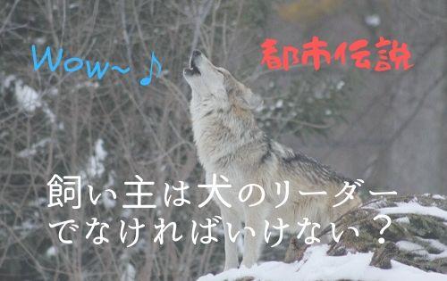 f:id:inunokoto:20200502150751j:plain