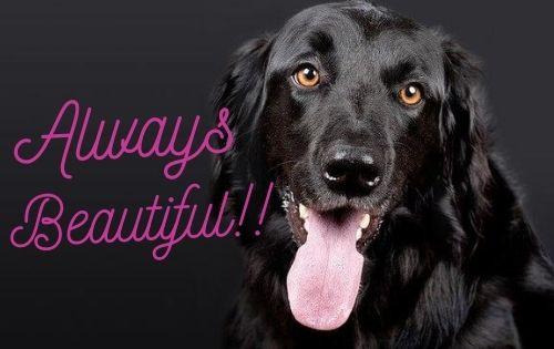 黒くて美しい犬の写真
