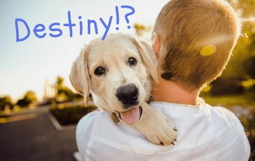 少年に抱かれて幸せそうなラブラドールの子犬の写真