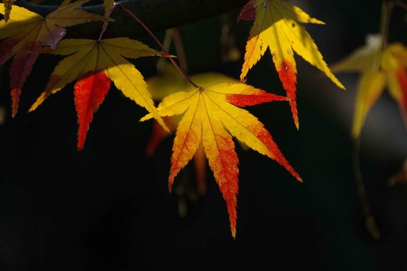 f:id:inuwan33:20111212152309j:image