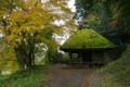 京都新聞写真コンテストひっそりと色づく