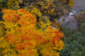 京都新聞写真コンテスト 燃える渓谷
