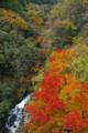 京都新聞写真コンテスト 秋彩の渓谷