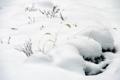 京都新聞写真コンテスト 雪舞台