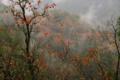 京都新聞写真コンテスト 氷雨の山峡の里