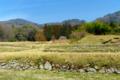 京都新聞写真コンテスト 梅の花咲く頃