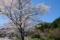 京都新聞写真コンテスト 里にも春がやってきた