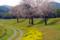 京都新聞写真コンテスト 春の曲線