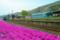 京都新聞写真コンテスト 芝桜が迎える駅
