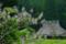 京都新聞写真コンテスト 桐花咲く里