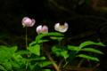 京都新聞写真コンテスト 3姉妹