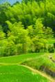 京都新聞写真コンテスト 黄緑色の季節