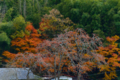 京都新聞写真コンテスト 賑やかな居宅