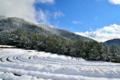 京都新聞写真コンテスト 雪来る