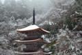 京都新聞写真コンテスト 雪の金剛院