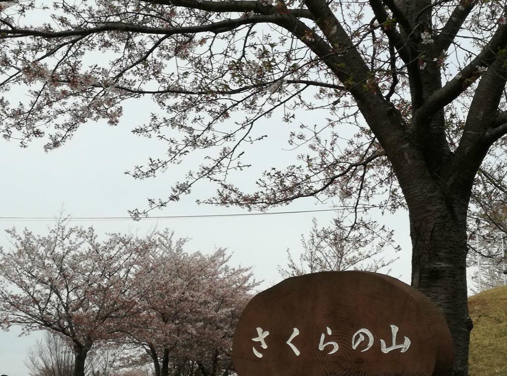 f:id:inzai-papa:20190415200833j:plain