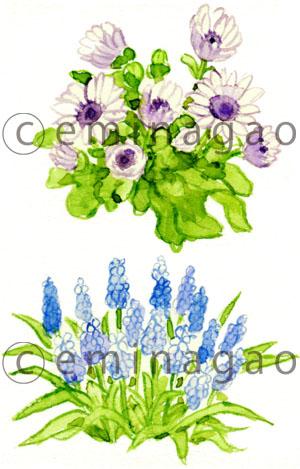 花の水彩イラスト 水彩イラストレーター Emi Nagao B