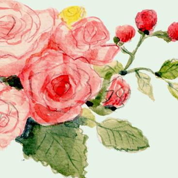 水彩イラストレーター 花 バラ