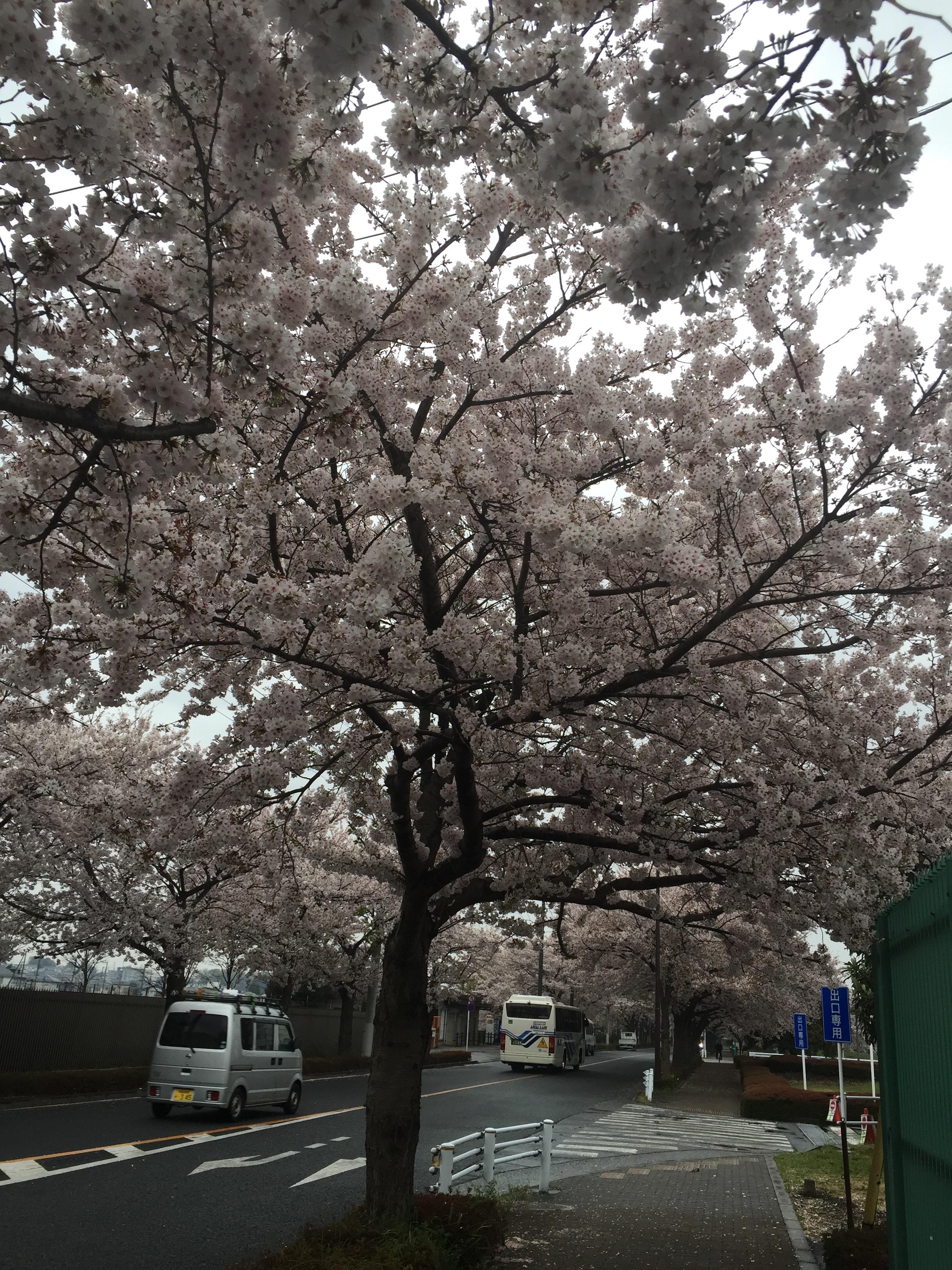 f:id:irinoouchi:20170411211416j:image