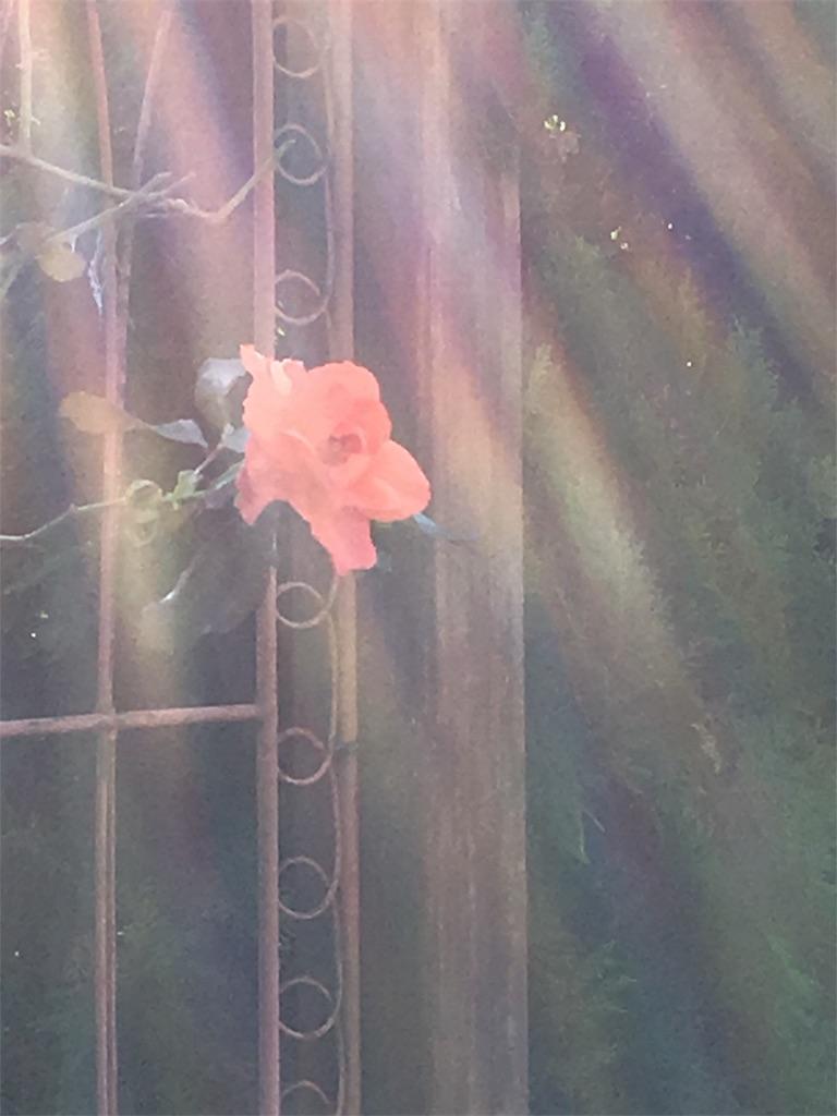 f:id:iris-crystal:20170628090952j:image