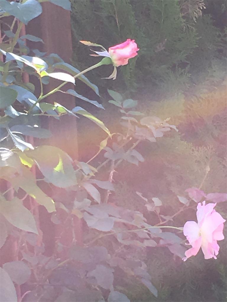 f:id:iris-crystal:20170628091025j:image