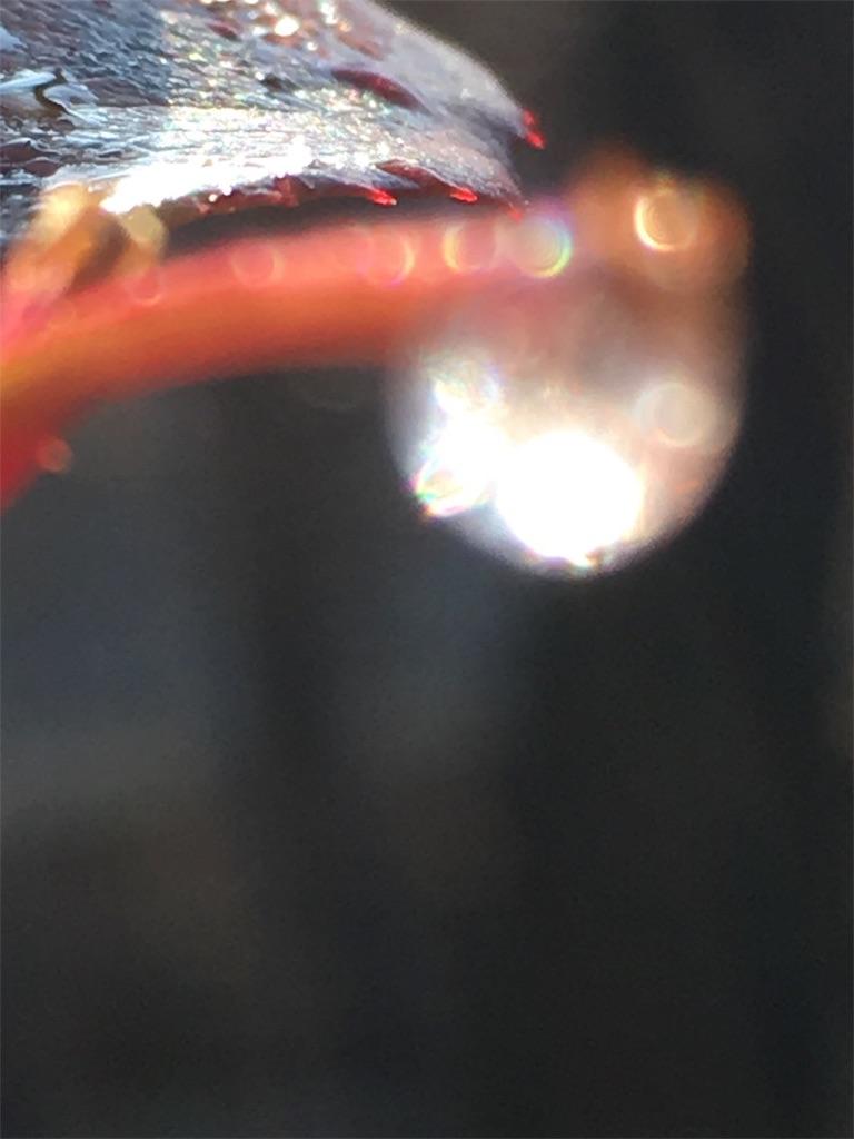 f:id:iris-crystal:20170818213929j:image