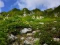 千畳敷カールのお花畑(ミヤマキンポウゲ、コイワカガミなど) と花崗岩