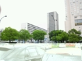 広島市内は楠がいっぱい