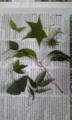白山神社の植物