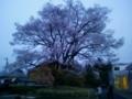 桜(飯田美術博物館)