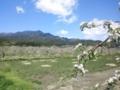 中央アルプスとりんご園