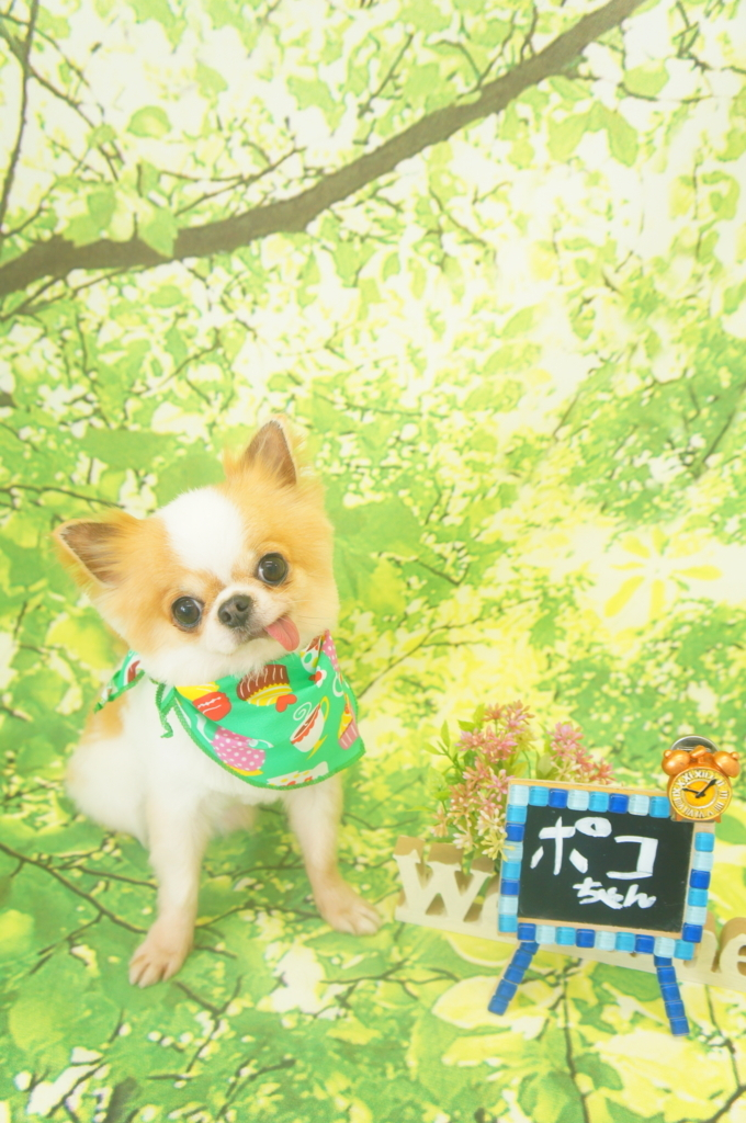 f:id:iroha-vet:20180530161259j:plain