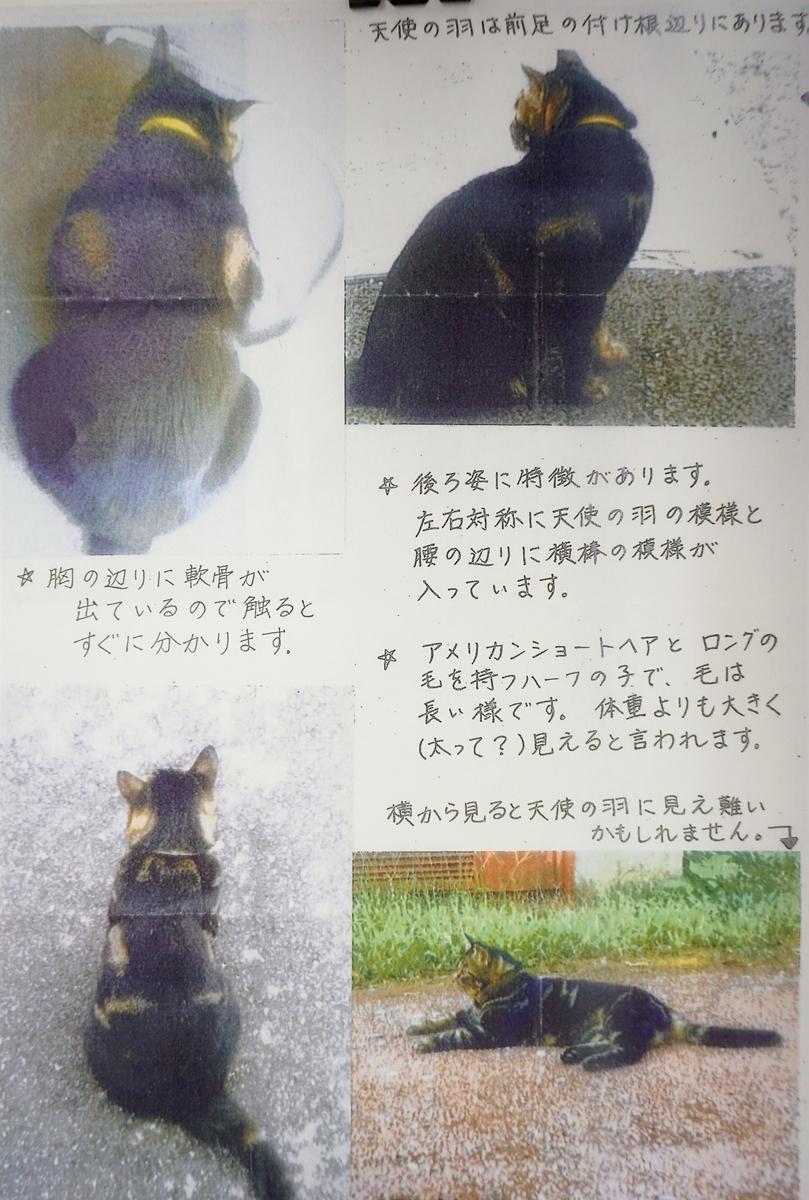 f:id:iroha-vet:20210215103850j:plain
