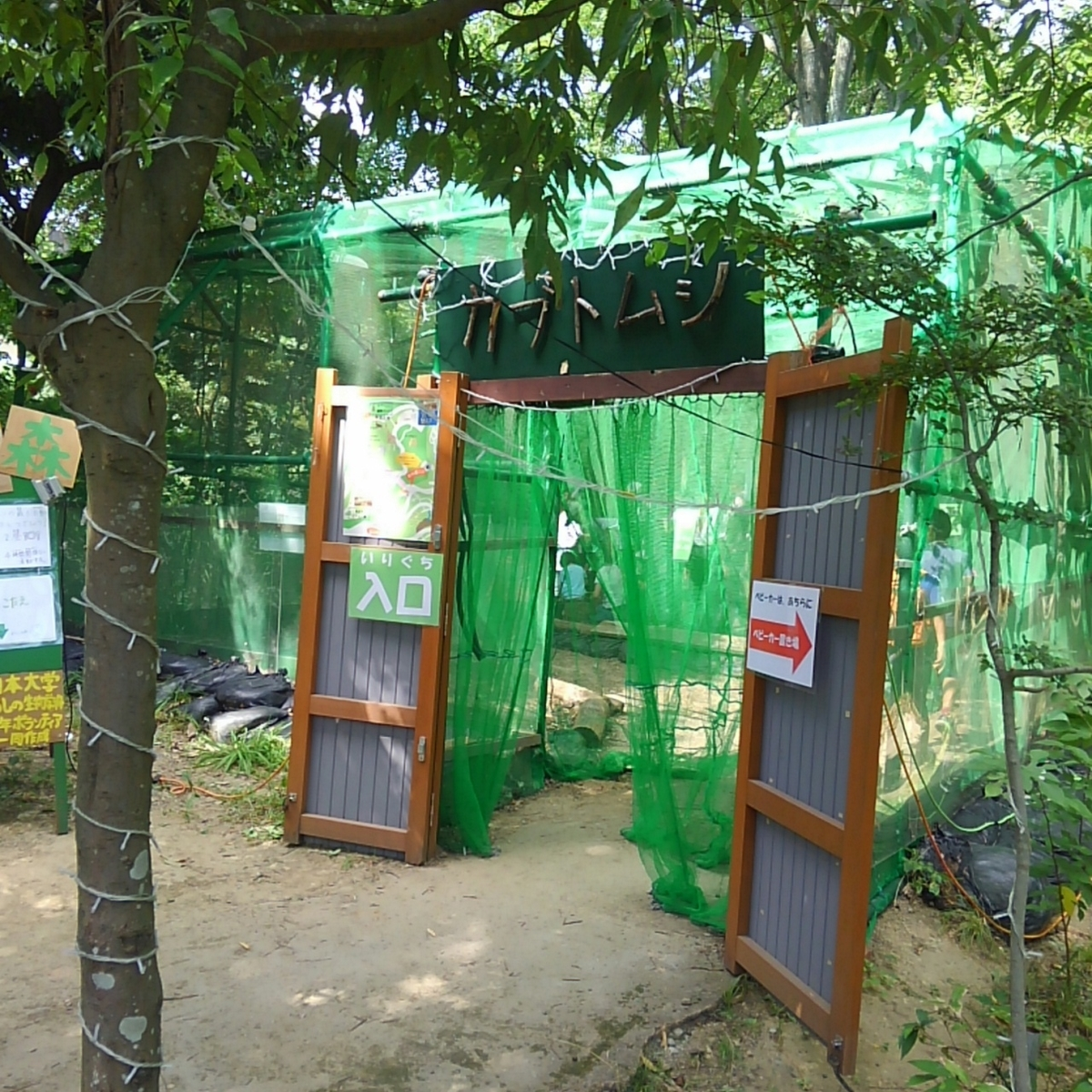 金沢動物園 カブトムシ展