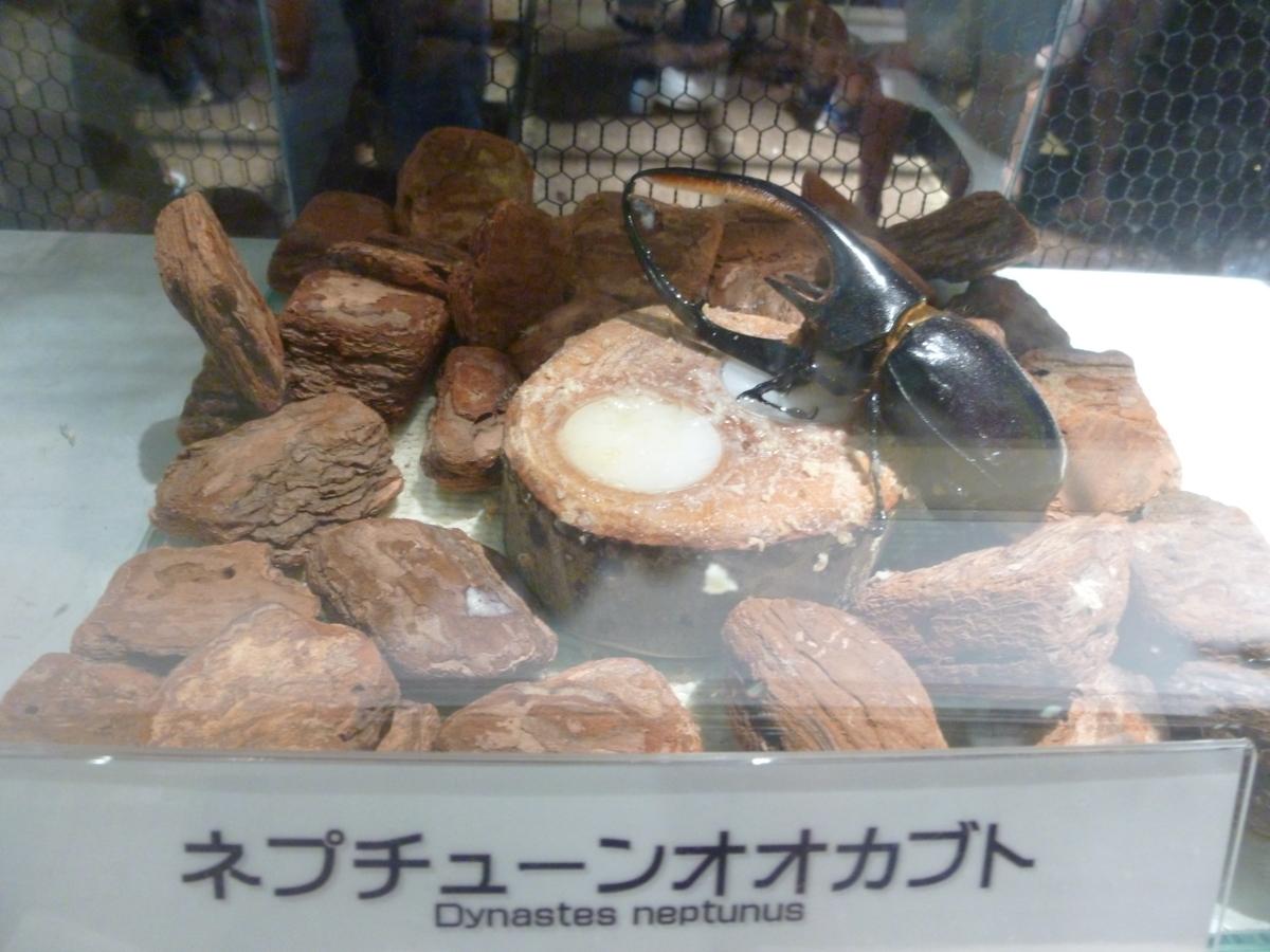 オービィ横浜 みんなの世界昆虫展