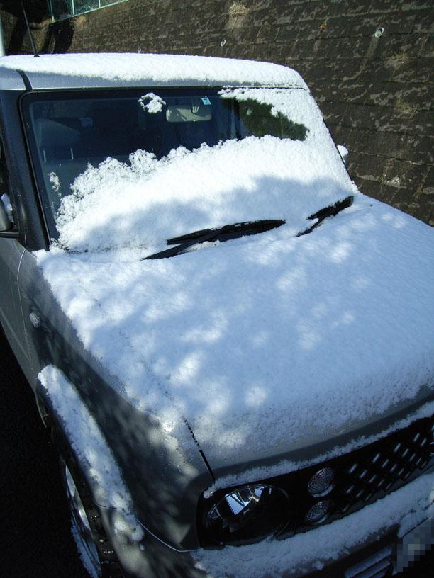 またも雪ですよ