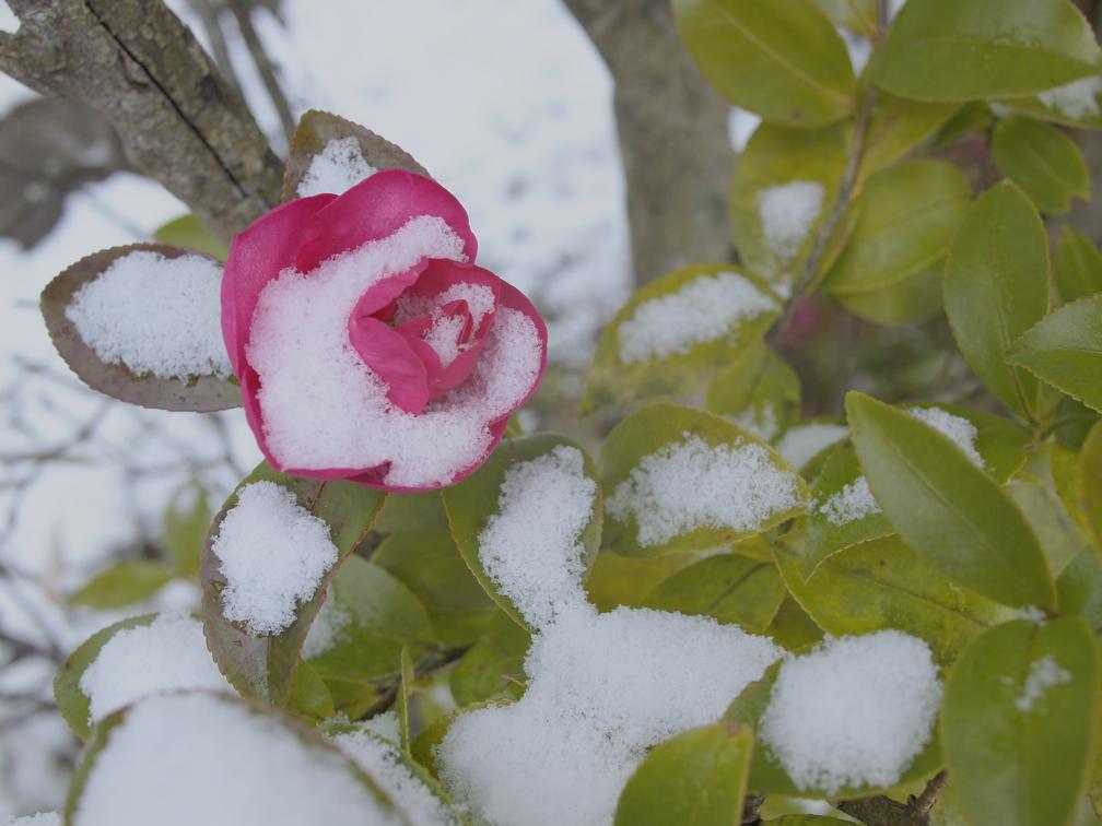 雪の庭先 ライトトーンで