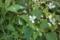 花に虫が集まる季節(1)