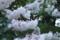 花に虫が集まる季節(2)