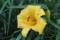 花に虫が集まる季節(3)