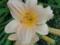 花の中にアリンコが