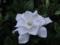 近所の草花(1)