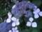 近所の草花(2)