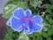 近所の草花(3)