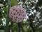 花にアリンコ