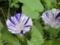 花びらの柄に興味