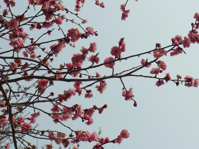 春は名のみの