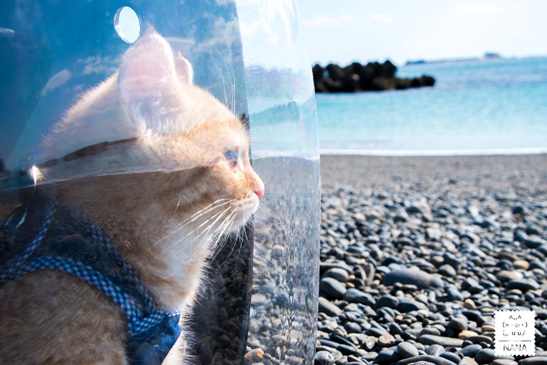 ひろの浜:猫