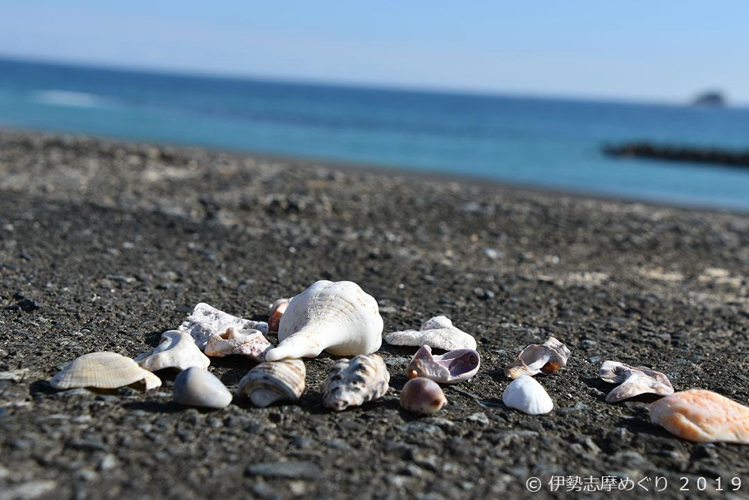 ひろの浜:貝殻
