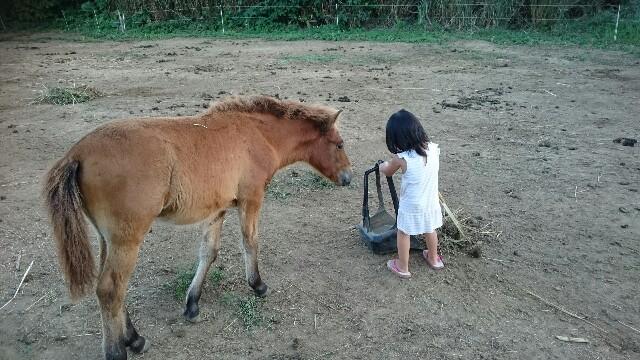 f:id:ishigakijimaumahiroba:20161102005033j:image